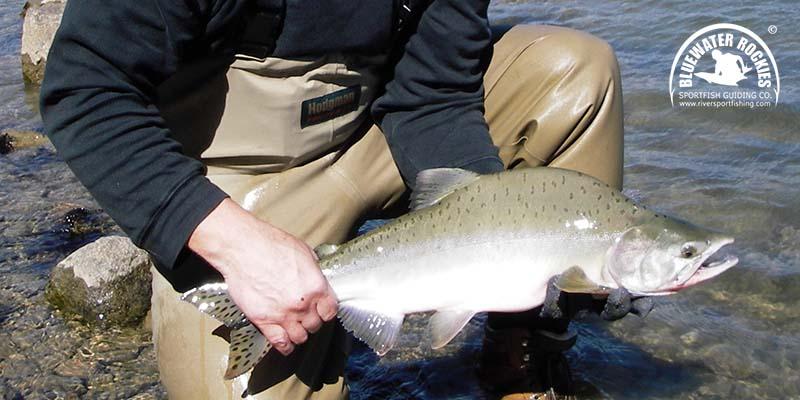 BC Pink Salmon Fishing Charters