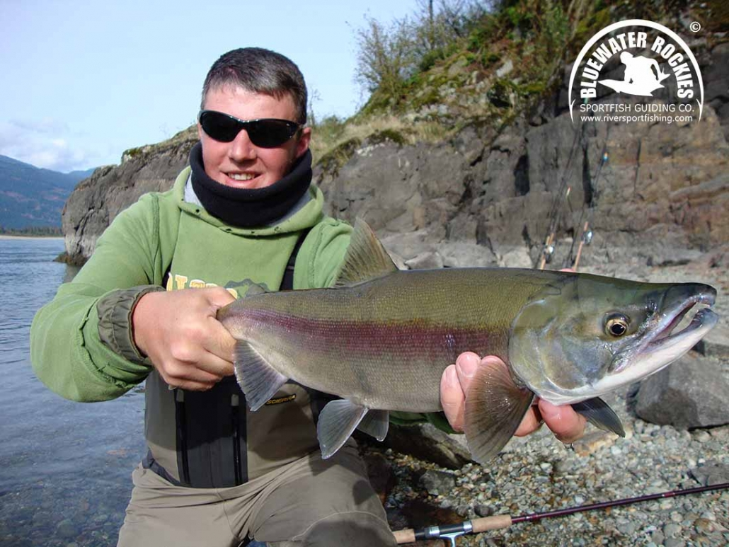 BC Sockeye Salmon Fishing Info