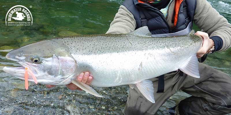 BC Steelhead Fishing Charters