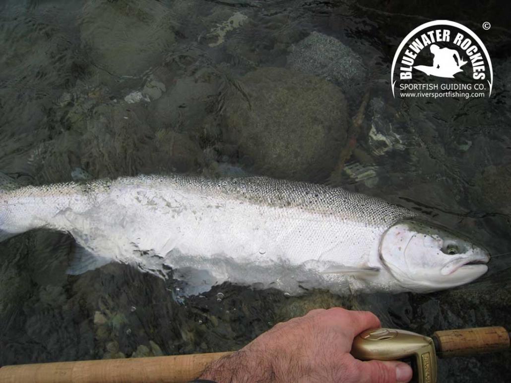 BC Steelhead Fishing Info