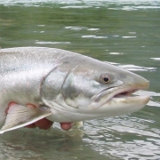 BC Trout Fishing Charters
